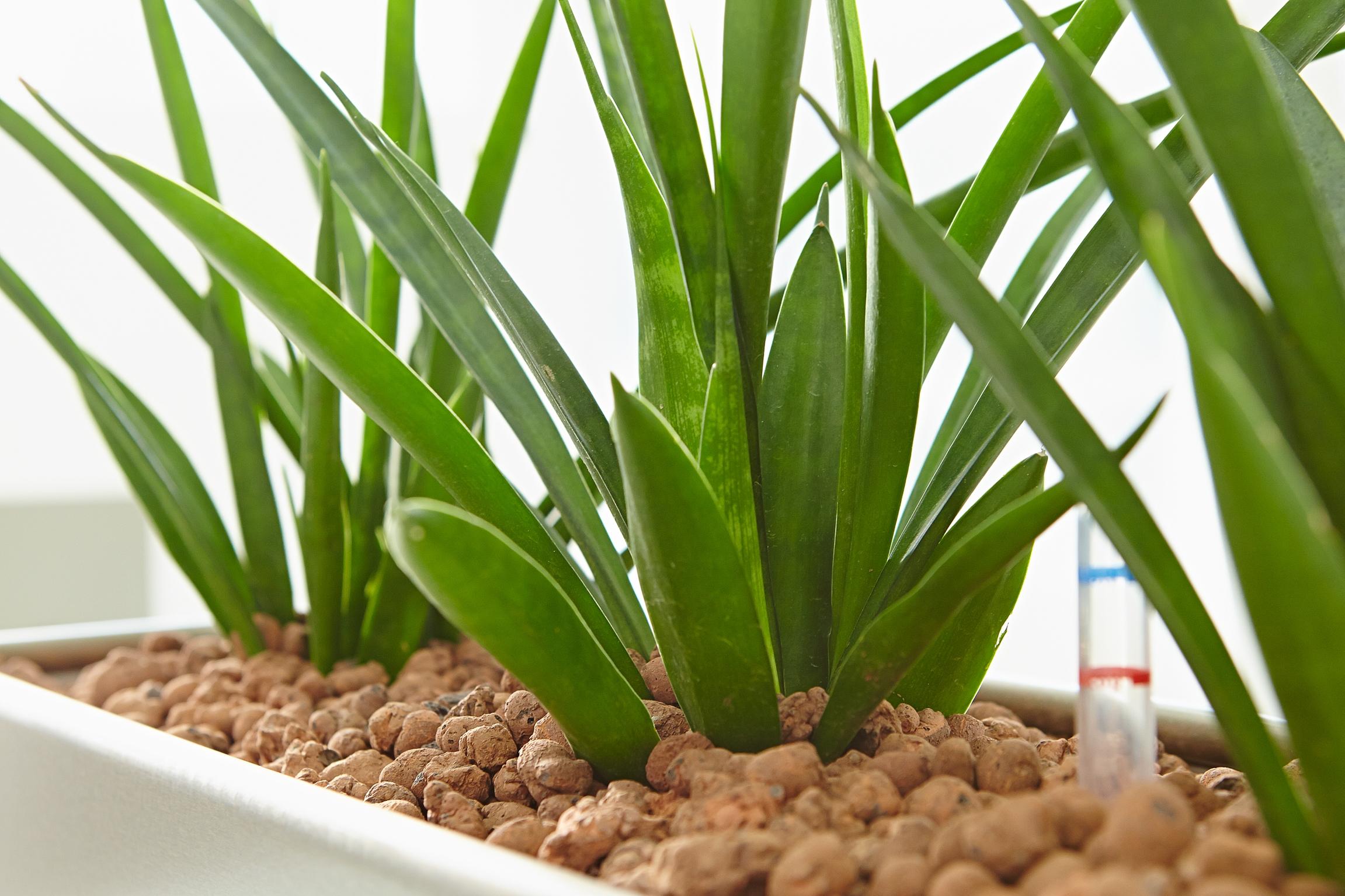 Kein Glück mit Zimmerpflanzen? Es ist ganz einfach!