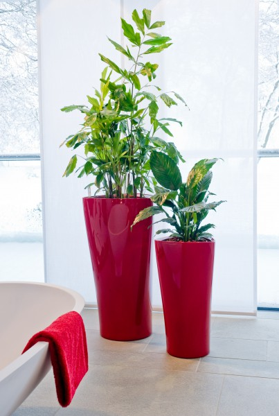 das gr ne medienhaus zimmerpflanzen gr npflanzen in. Black Bedroom Furniture Sets. Home Design Ideas