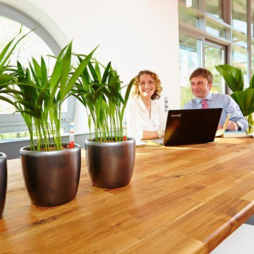 Mit Hydrokultur lässt sich jeder Raum pflegeleicht begrünen