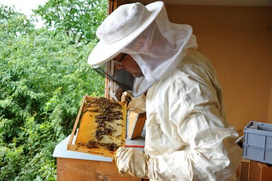 Von Bienchen und Blümchen