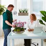 In guten Händen: Pflegeservice fürs Büro