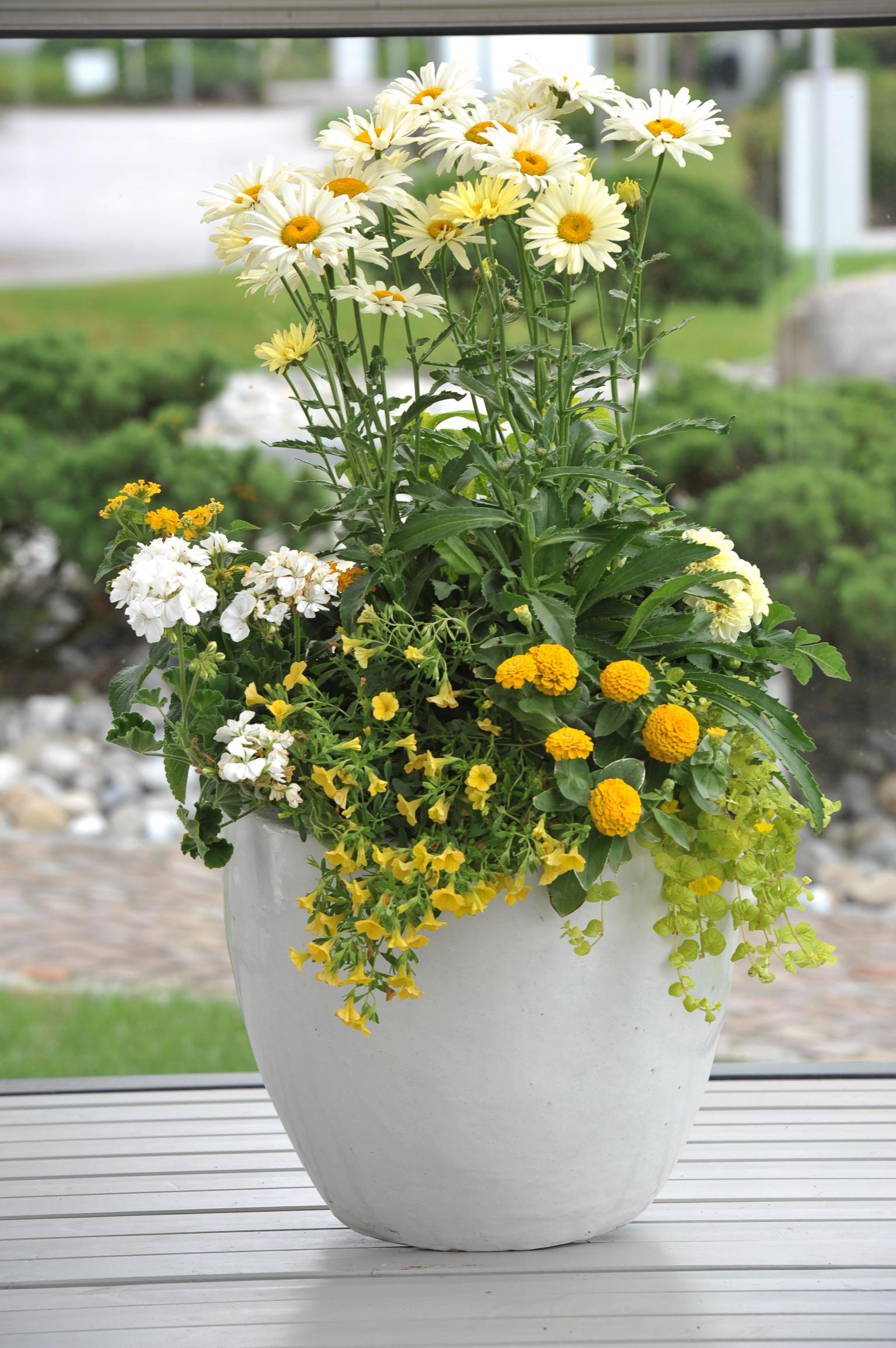 Richtig kombinieren: Die schönsten Blühpflanzen für den Kübel