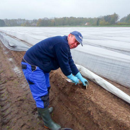 Erntehelfer aus Osteuropa stechen jetzt Spargel