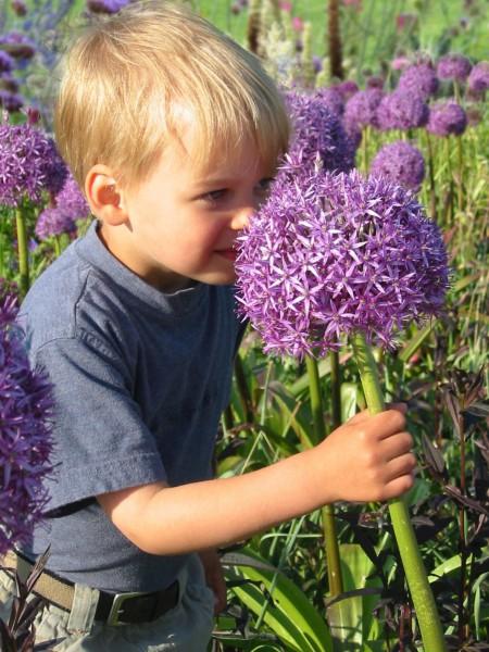 Kinderfreundliche Pflanzen - Viele attraktive Arten regen zum Riechen, Anfassen und Basteln an. Die besten Tipps vom Premium-Gärtner.