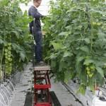 Mit gutem Gefühl: Im Münsterland wird hochwertiges Gemüse angebaut