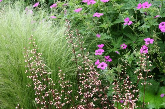 Gartenbild der 24. Kalenderwoche