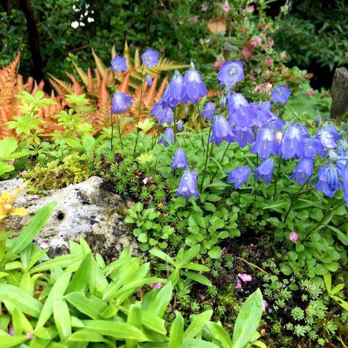 Aktueller Blick auf einen schattigen Steingarten