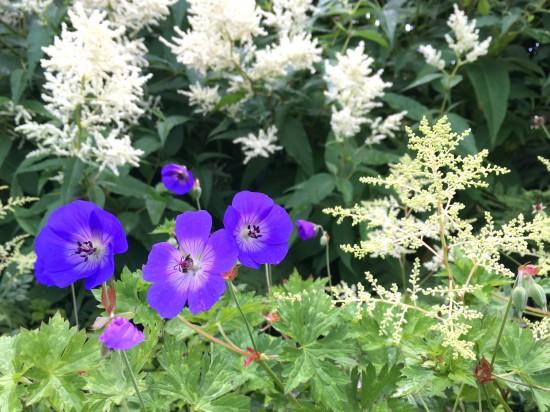Gartenbild der Woche: Sommerliche Staudenfreude