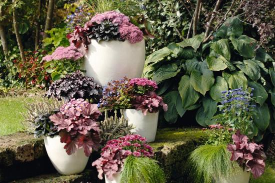 Herbstzauber für Garten und Balkon