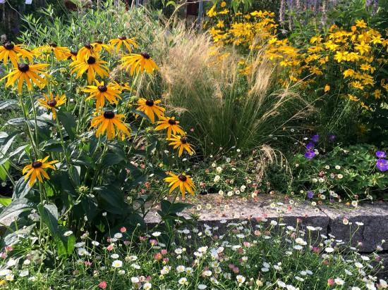 Gartenbild der Woche: Goldgelber Spätsommer