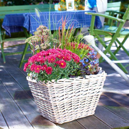 pflanzen im herbst das gr ne medienhaus. Black Bedroom Furniture Sets. Home Design Ideas