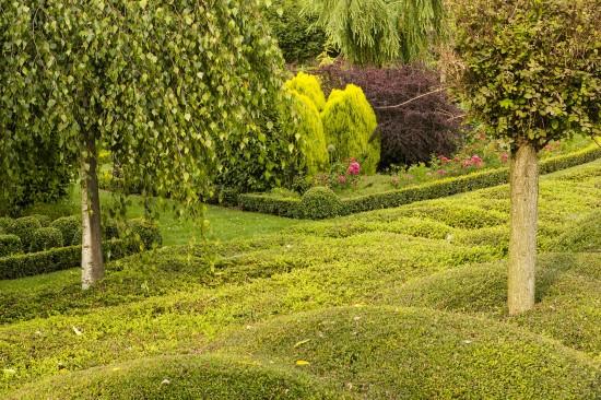 Pflegeleicht und dennoch schön:Bodendecker sparen Arbeit im Garten