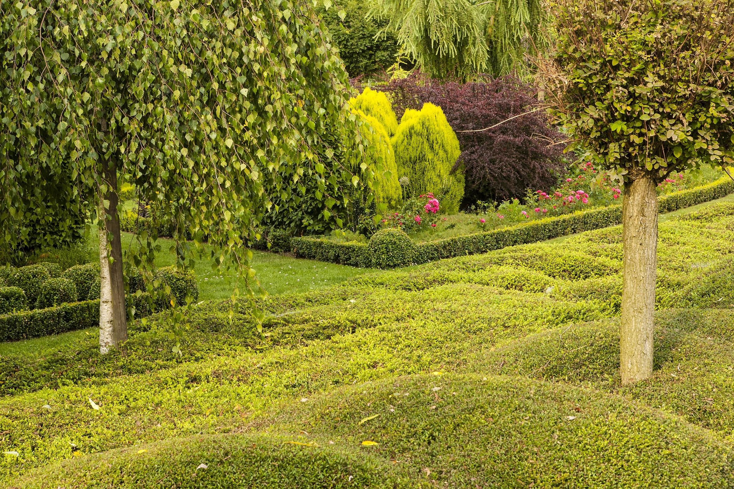 Pflegeleicht und dennoch schön: Bodendecker sparen Arbeit im Garten