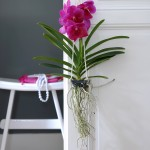 Orchideenpflege – gar nicht so aufwendig wie immer behauptet