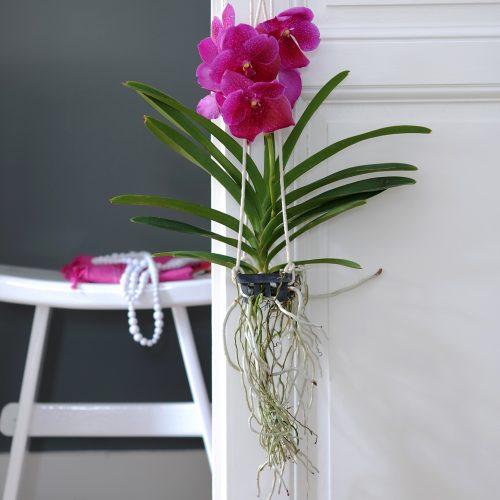Orchideenpflege -– gar nicht so aufwendig wie immer behauptet