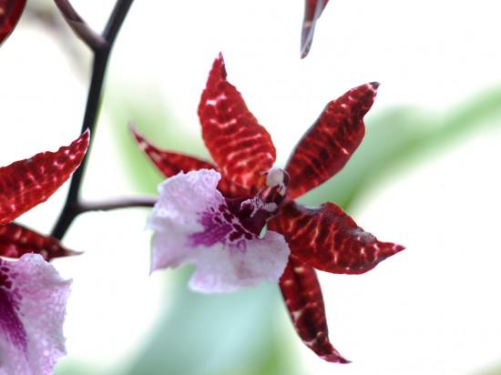 Orchideenpflege –- gar nicht so aufwendig wie immer behauptet