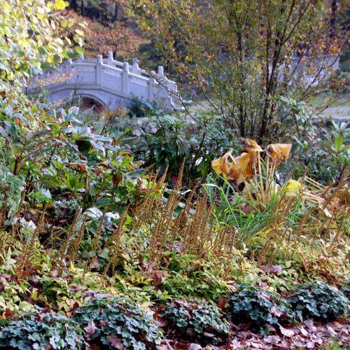 Wie kleine Wachmänner stehen die verblühten Rispen der Astilben hinter den kleinen gedrungenen Heuchera-Pflanzen