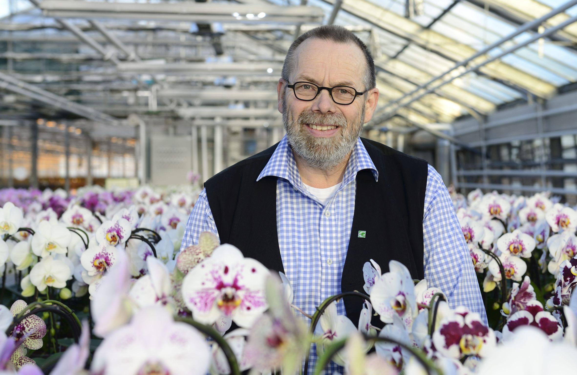 Aufstieg der Schmetterlings-Orchidee geht weiter