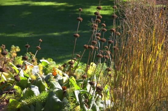 Herbstzeit ist Gräserzeit