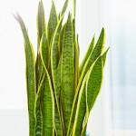Hydrokultur holt das Beste aus Zimmerpflanzen heraus