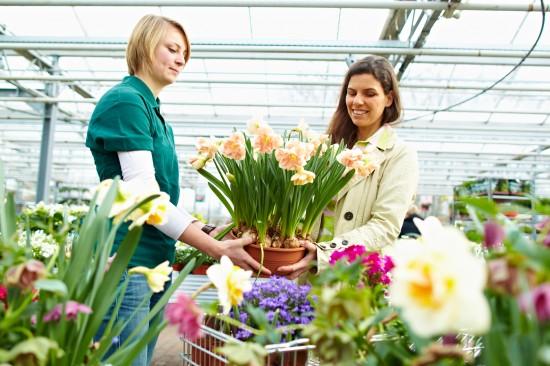 Holen Sie sich den Frühling ins Haus - mit vorgezogenen Blühpflanzen aus Gärtnerhand
