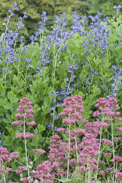 Von pompös bis pflegeleicht: Lieblingspflanzen mit Potenzial
