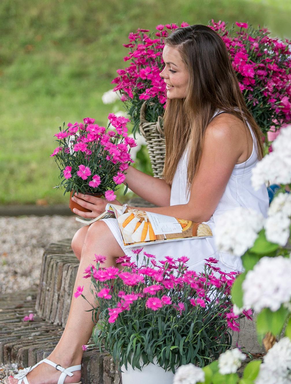 """Mit der """"Nellieke"""" hält eine """"göttliche Blume"""" Einzug in die Gärten"""