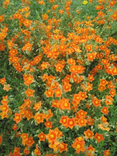 Orange: die Farbe der Optimisten
