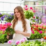 Achtung, Frost! Viele beliebte Sommerblumen vertragen keine Minusgrade