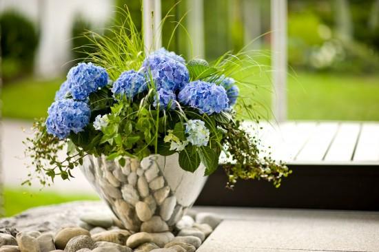 Kübelpflanzen für den Schatten blühen ausdauernd