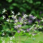 Beetgeflüster: Schwebende Blüten und zarte Gräserrispen verleihen Beeten Leichtigkeit und Dynamik