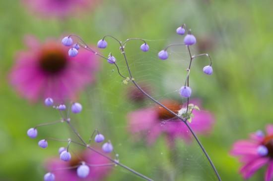 Beetgeflüster