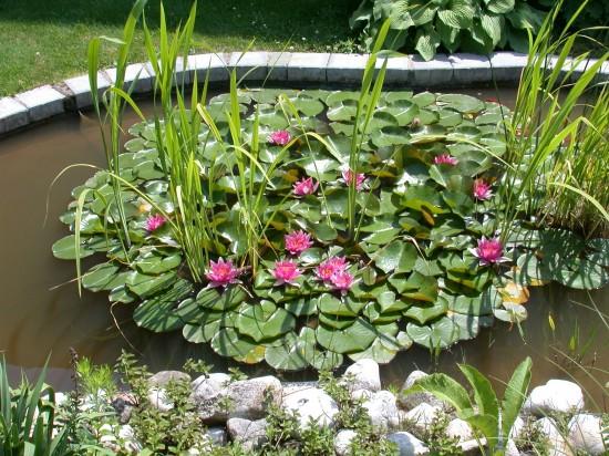 Gärtnern im Zeichen des Wassermanns