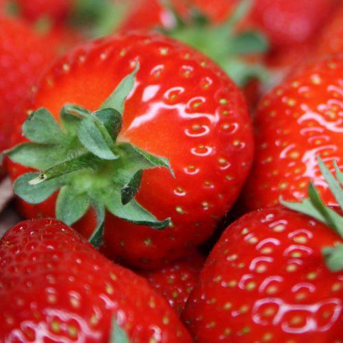 Erdbeeren von heimischen Feldern sind echte Superfrüchte