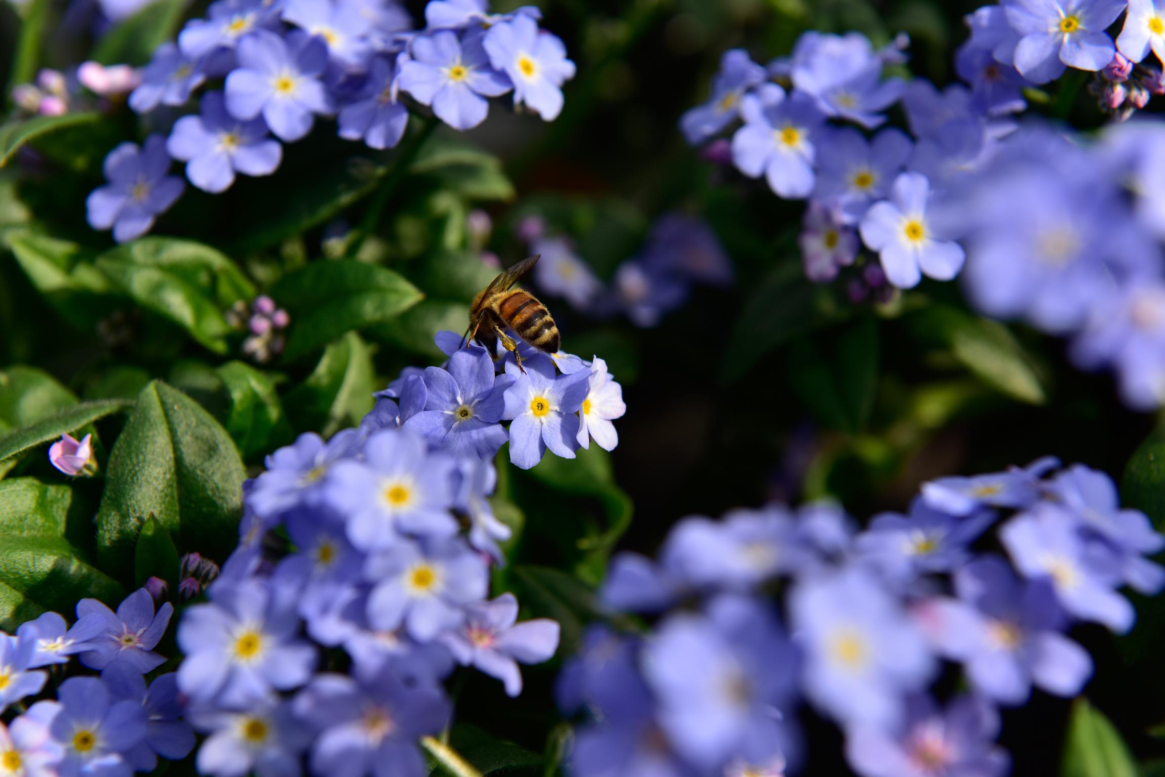 Nektarweiden Fur Balkon Und Terrasse Gutes Fur Bienen Tun Das