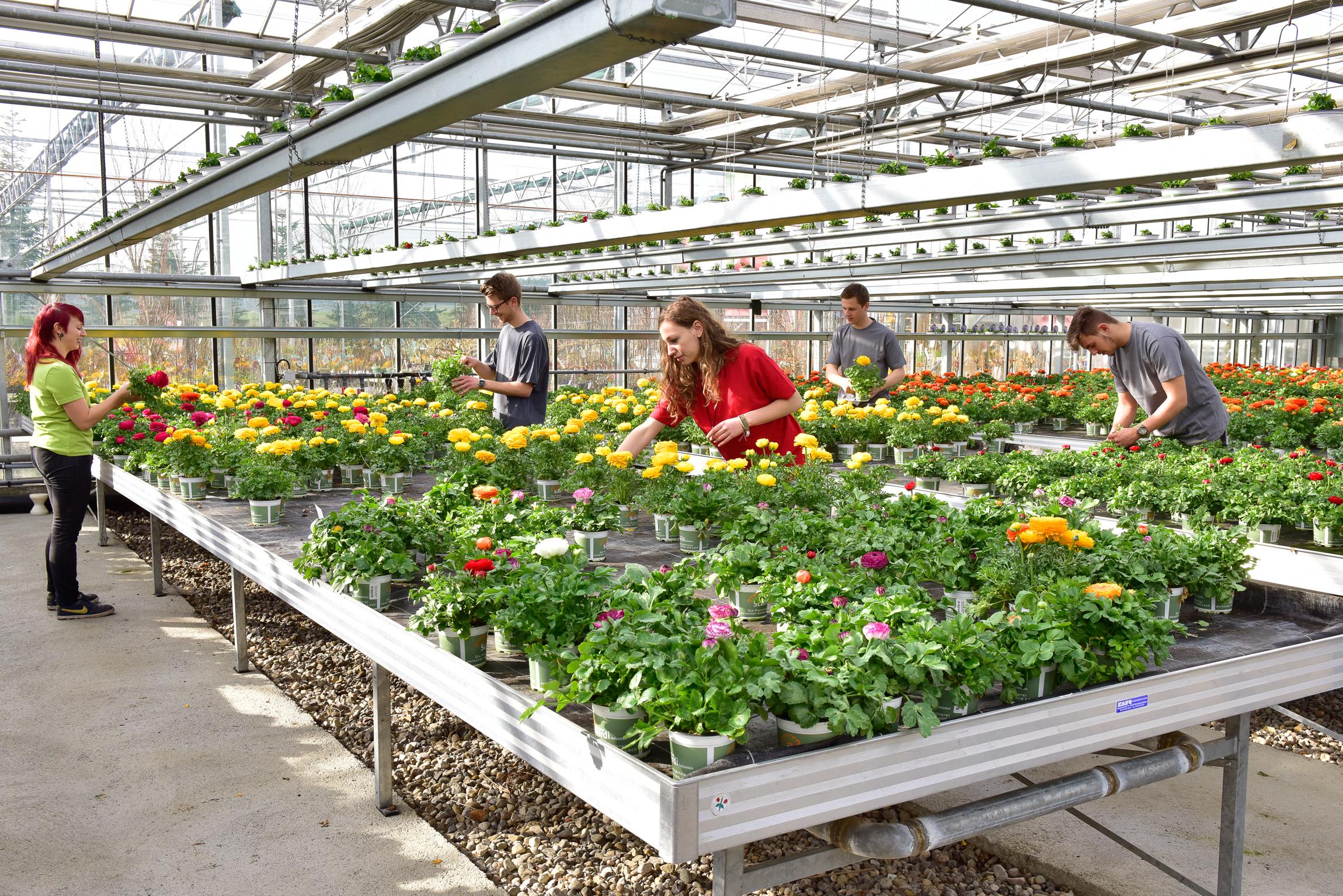 Welche Fähigkeiten müssen Auszubildende zum Gärtner mitbringen?