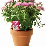 GLOBALG.A.P. stellt neues Label für nachhaltige Blumen und Zierpflanzen vor