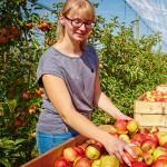 Was macht eigentlich ein Profi-Gärtner im Herbst?