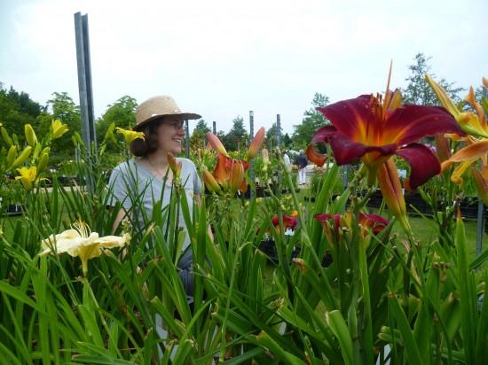 Taglilien - die Unermüdlichen