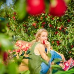 Täglicher Apfelgenuss hält das Cholesterin in Schach