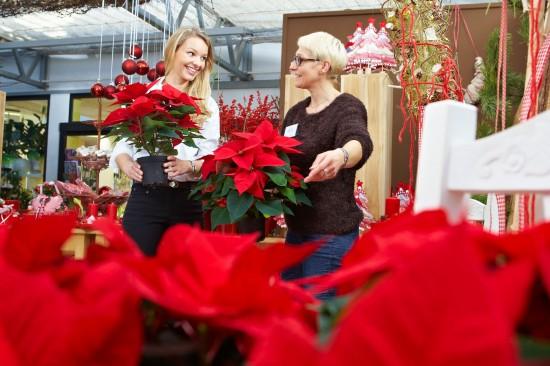 Was macht eigentlich ein Profi-Gärtner im Winter?