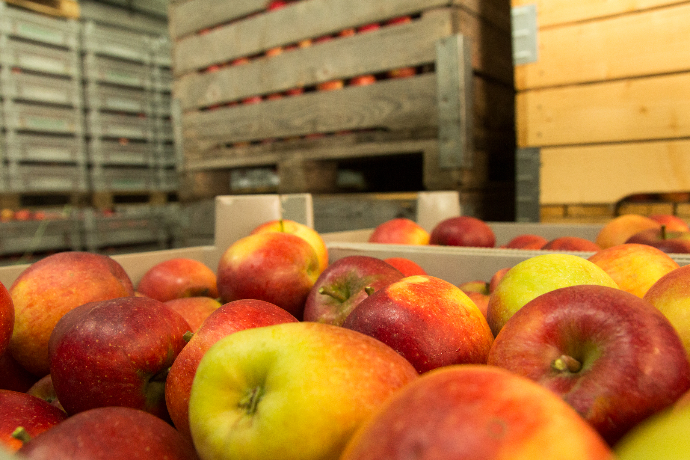 Wie Obstanbauer das Altern von Äpfeln wirkungsvoll verlangsamen