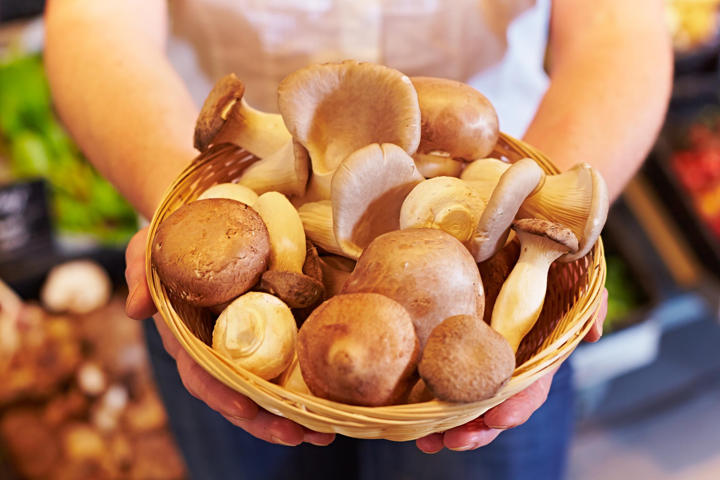 Mushrooms and Health – Speisepilzforschung rund um die Welt