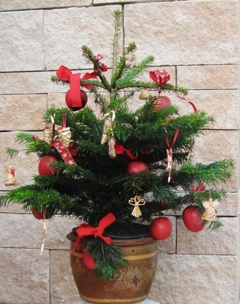 Äpfel und Birnen in der Weihnachtszeit