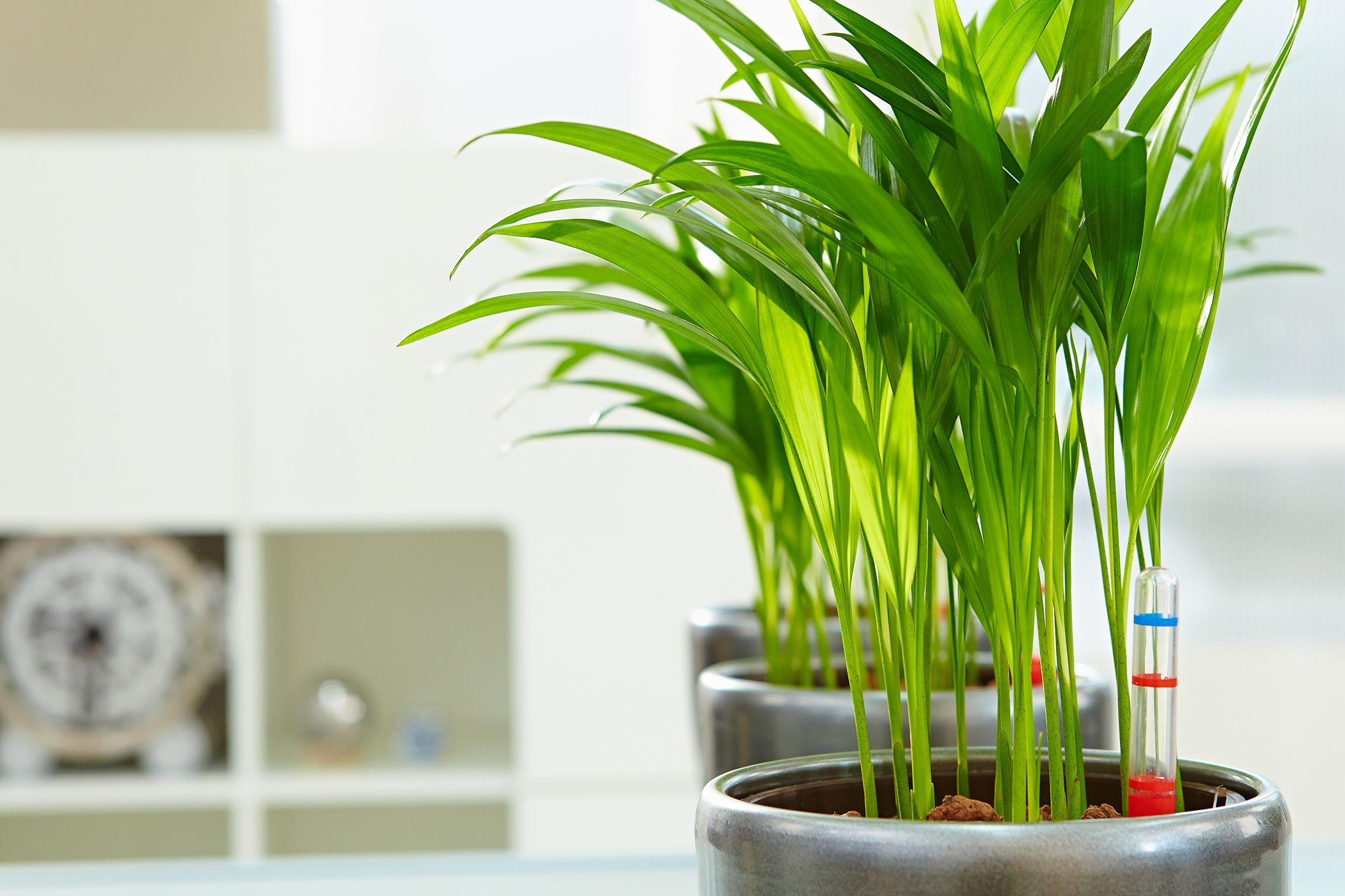 Grüner Trend: Indoor Gardening macht kreativ und glücklich