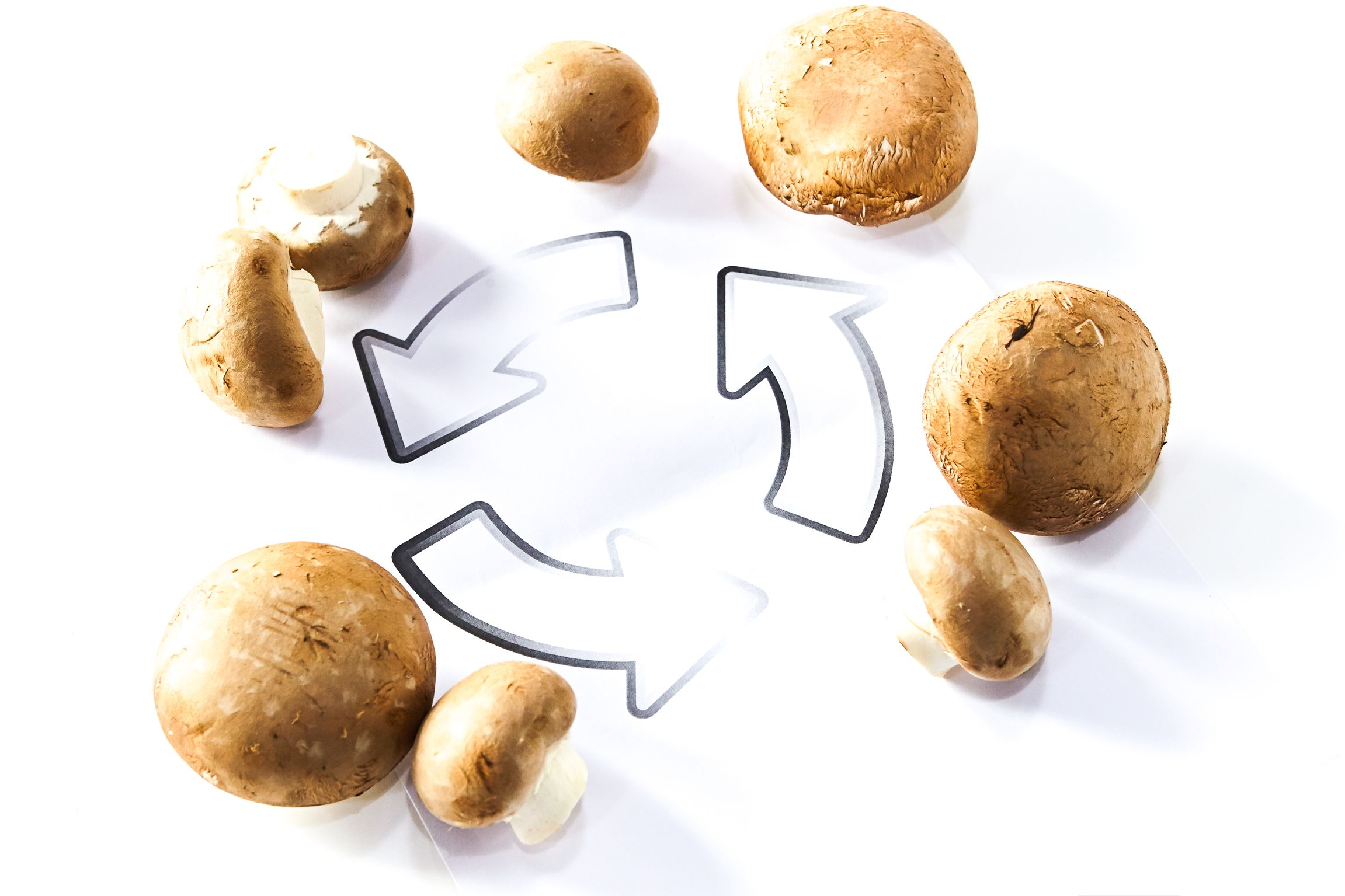 Pilze – das große Recyceln