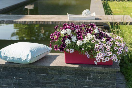 perfekt abgestimmte mischung neues pflanzentrio kusinchen das gr ne medienhaus. Black Bedroom Furniture Sets. Home Design Ideas