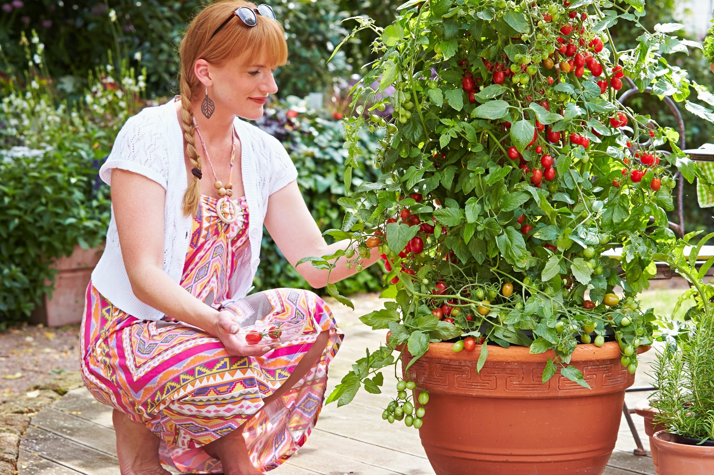 Experten raten: Mut bei der Pflanzenauswahl zahlt sich aus