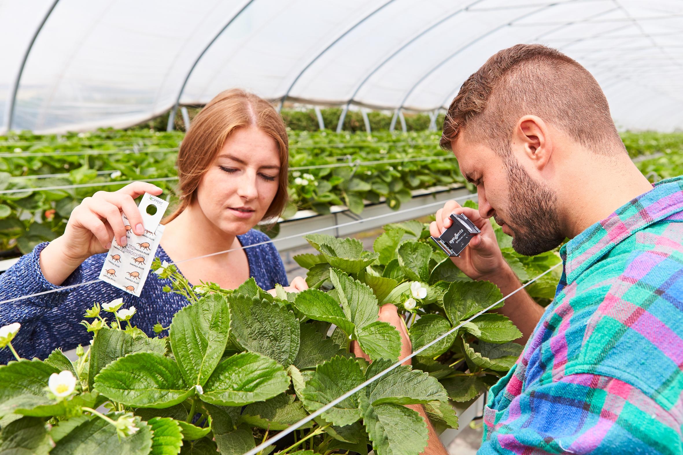 Was bedeutet eigentlich integrierter Pflanzenschutz im Obstbau?