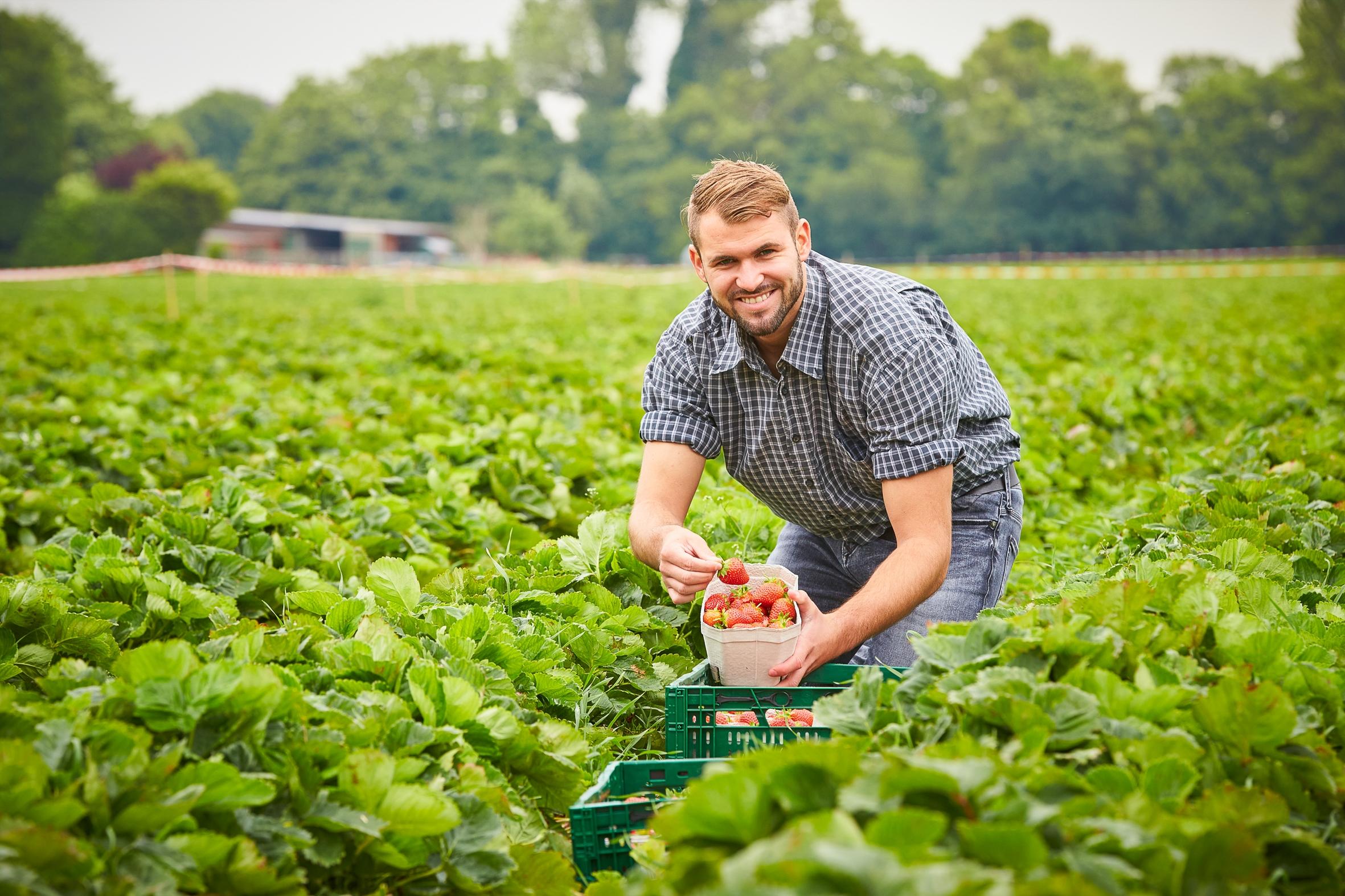 Lecker und sehr gesund: Erdbeeren sind ein Volltreffer der Natur